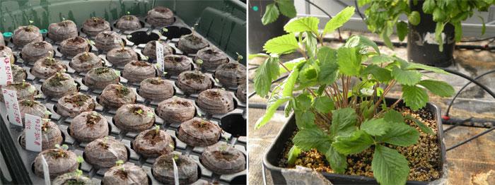 El crag o la b squeda de excelencia cient fica para el for Horticultura definicion