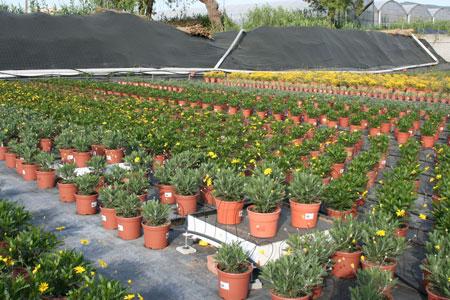 Puesta al d a sobre control del riego en viveros de planta for Plantas que hay en un vivero