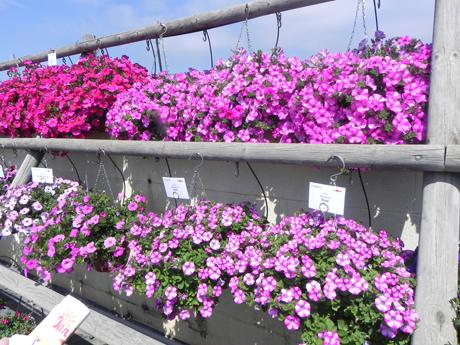 El sector de flores y plantas ornamentales clama ante la for Produccion de plantas ornamentales