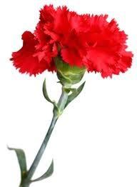 La importación de clavel en 2012 supera por primera vez en la ...