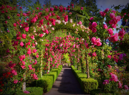 Las cuatro estaciones de los c lebres the butchart gardens for Arboles y plantas para jardin