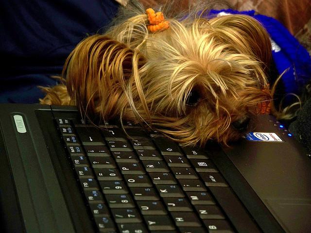 Perros en el trabajo- imagen de Flickr