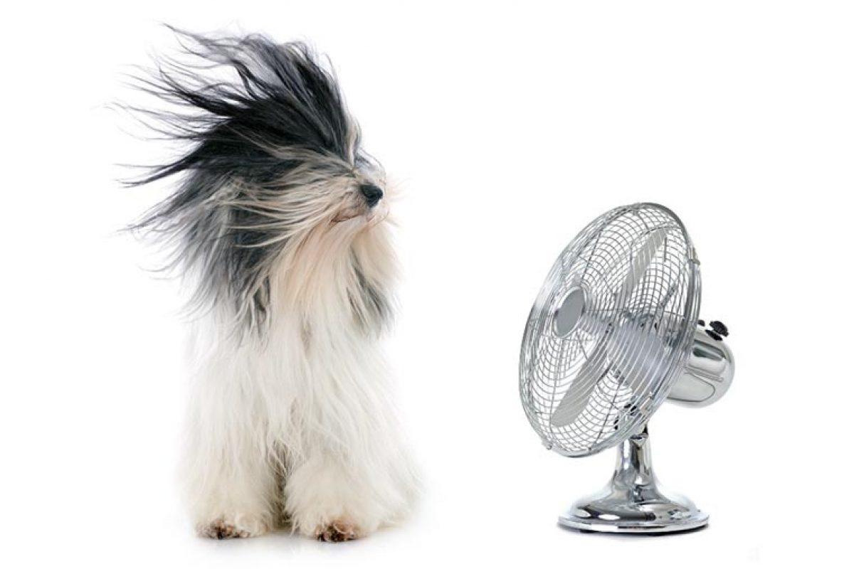 Prepárese para afrontar el calor del próximo verano